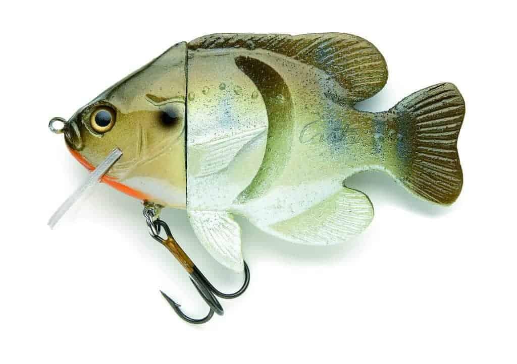 Hard Head Sunfish