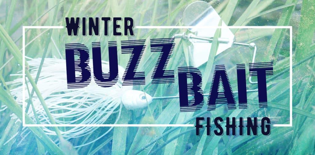 Winter Buzzbait Fishing